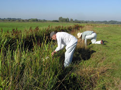 George Batchelor & Jim Armes releasing spiderlings at Castle Marshes reserve