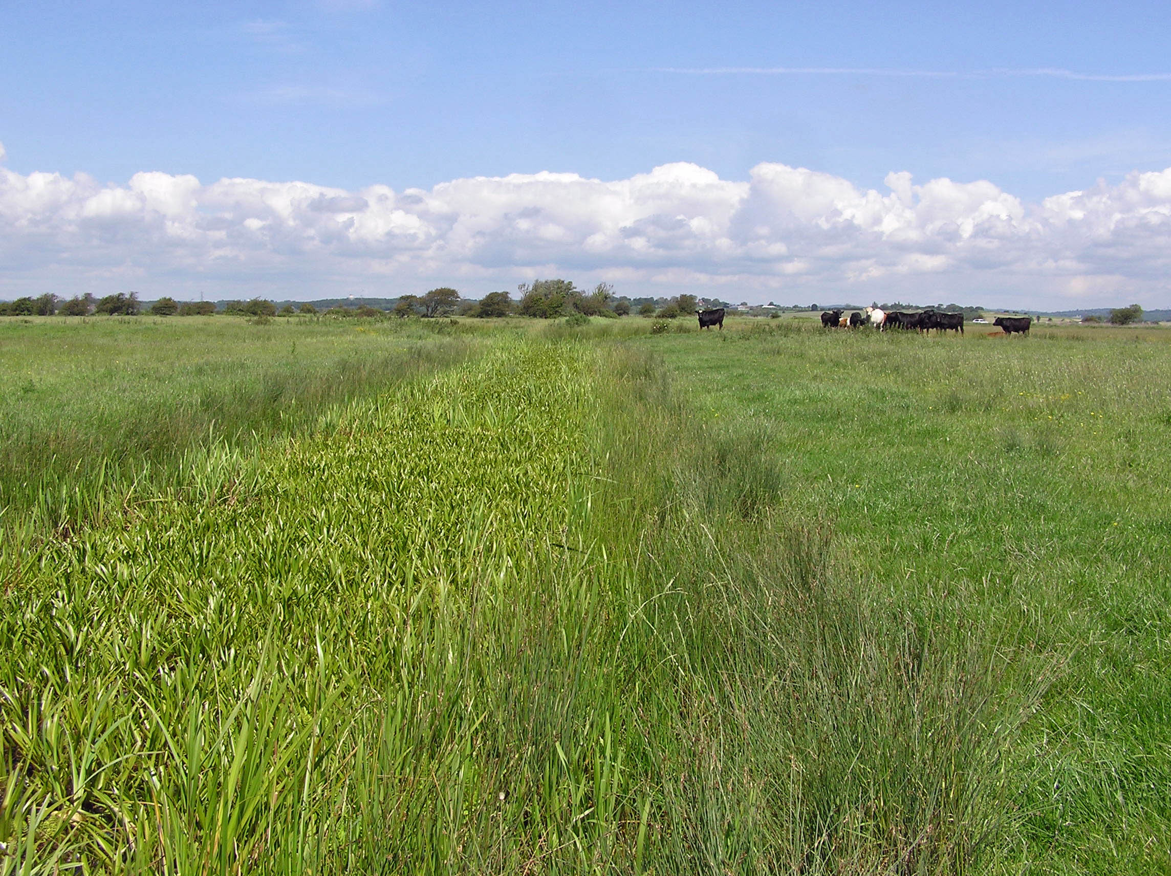 T grazing marshes of the Pevensey Levels