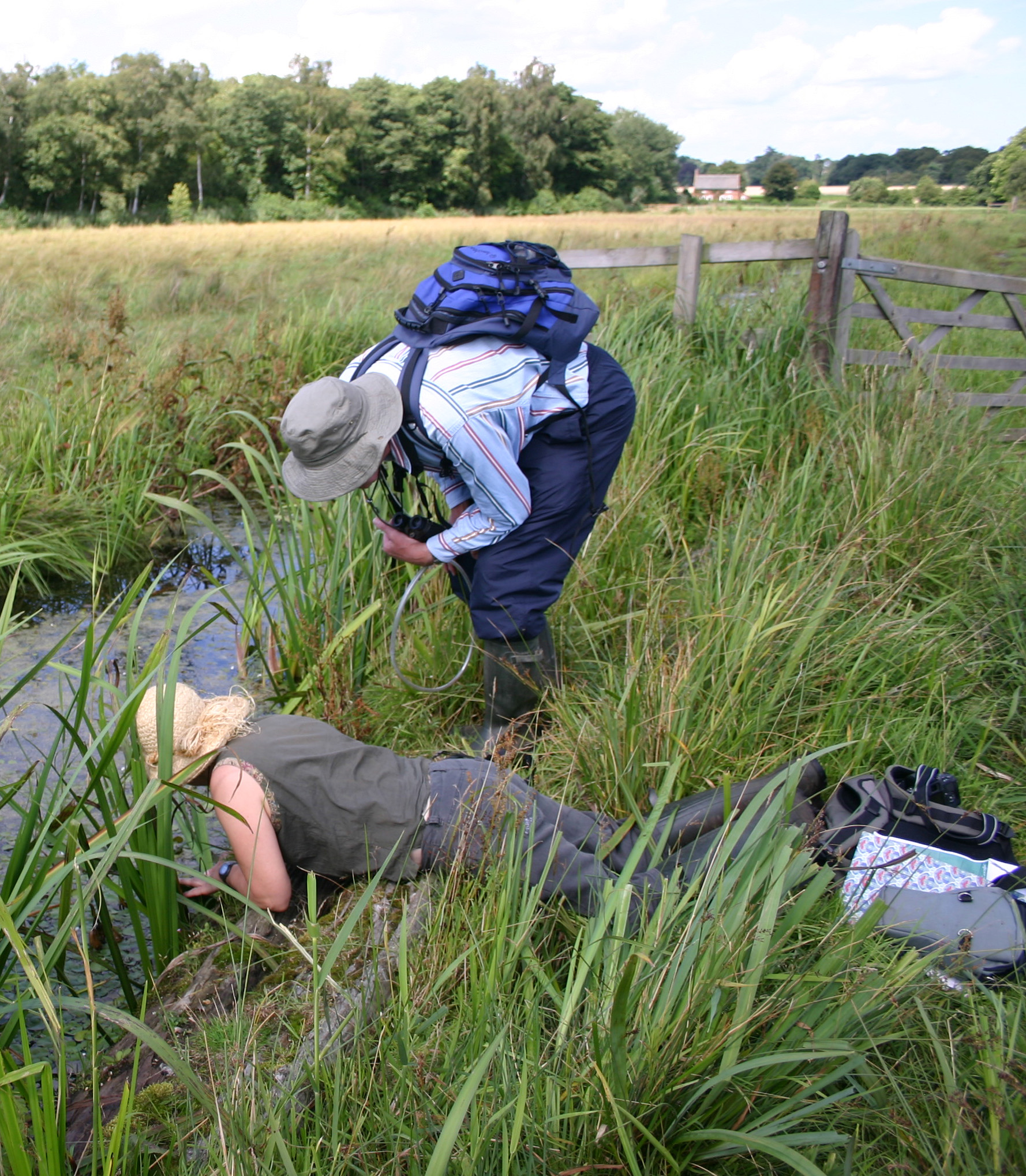 British Arachnological Society volunteers searched for overlooked populations