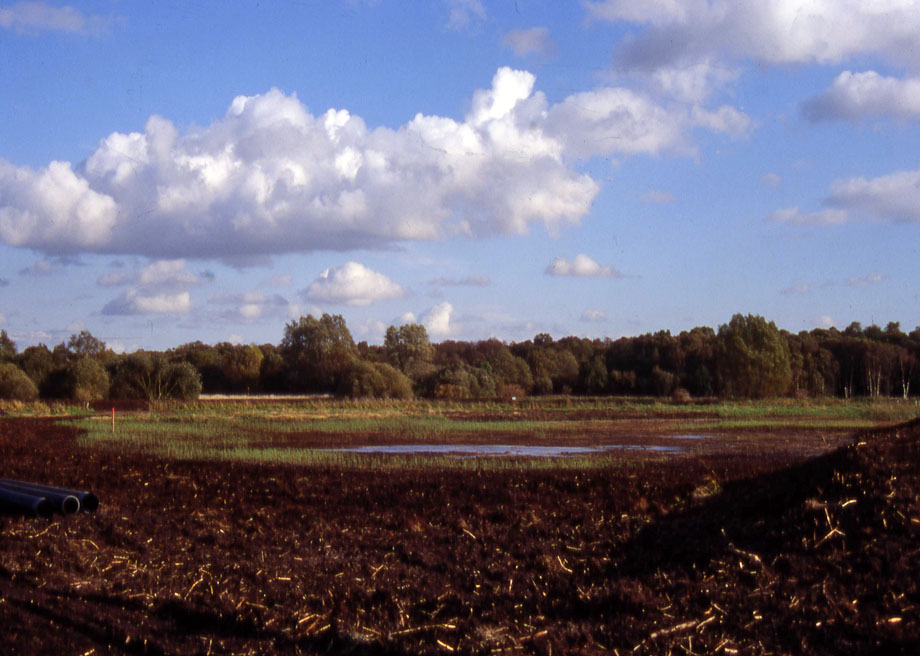 Degraded surface peat was scraped from an extensive areas of the fen's surface in the late 1990s