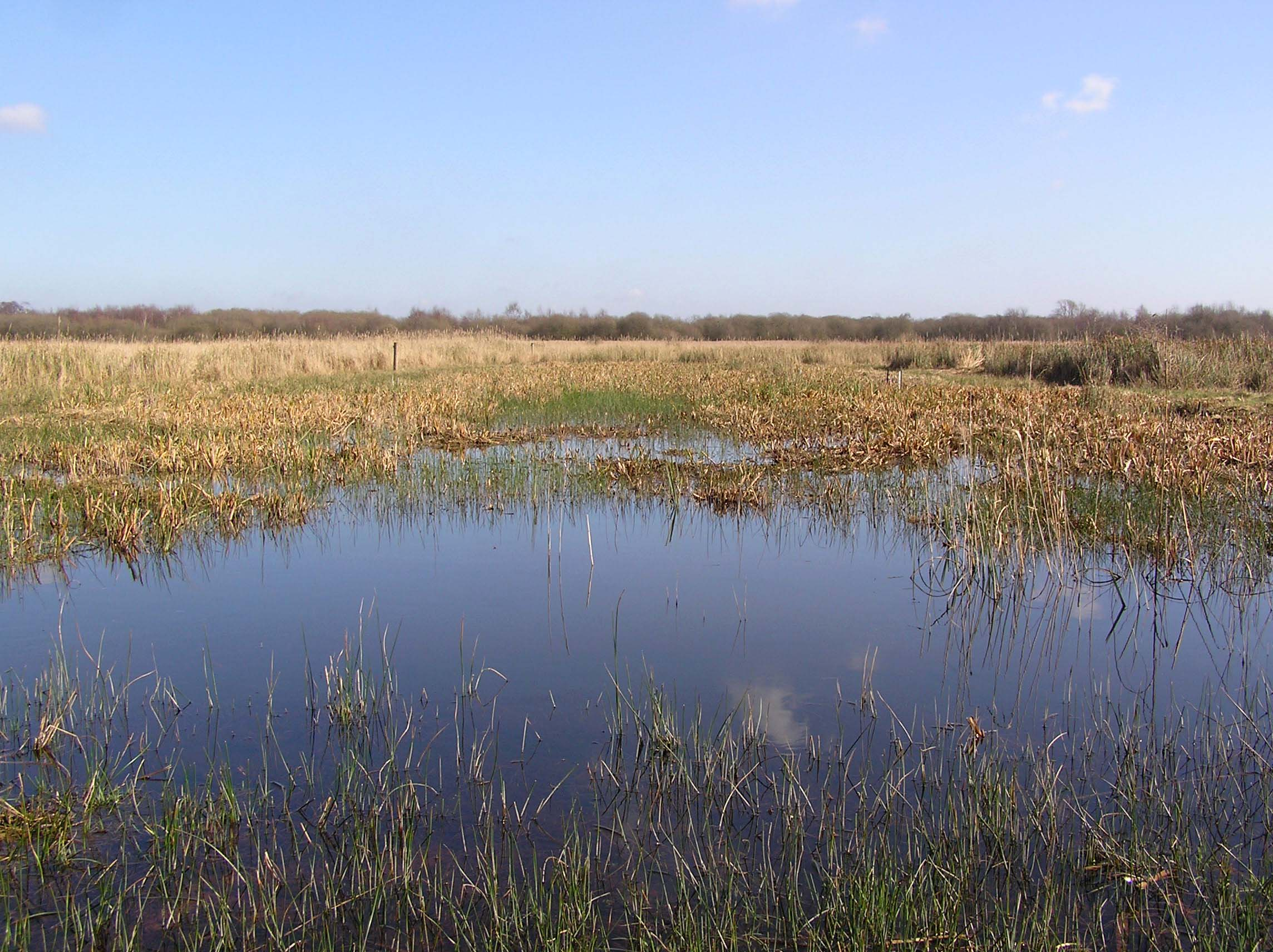 Extensive winter flooding on Redgrave & Lopham Fen after borehole closure