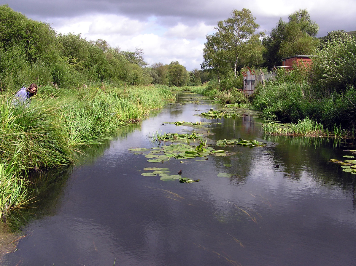 The Tennant Canal where D. plantarius was first identified from South Wales in 2003